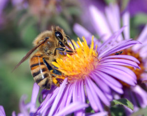 Cover photo for Bee Aware for Bee Swarms