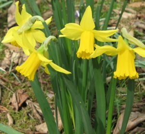 Cover photo for Plant Bulbs Now for Spring