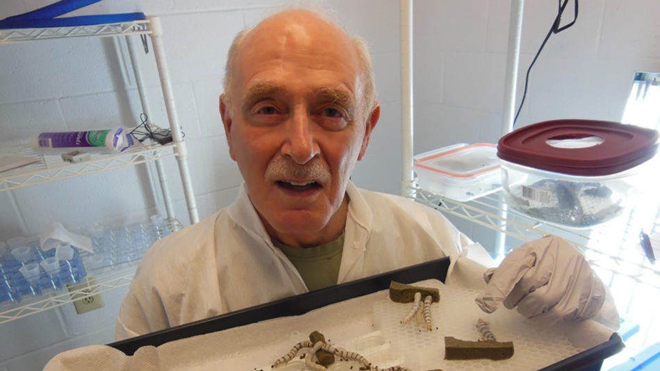 Pictured in his lab, Allen Cohen holds a tray of silkworms