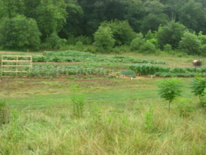 Macon County Community Garden