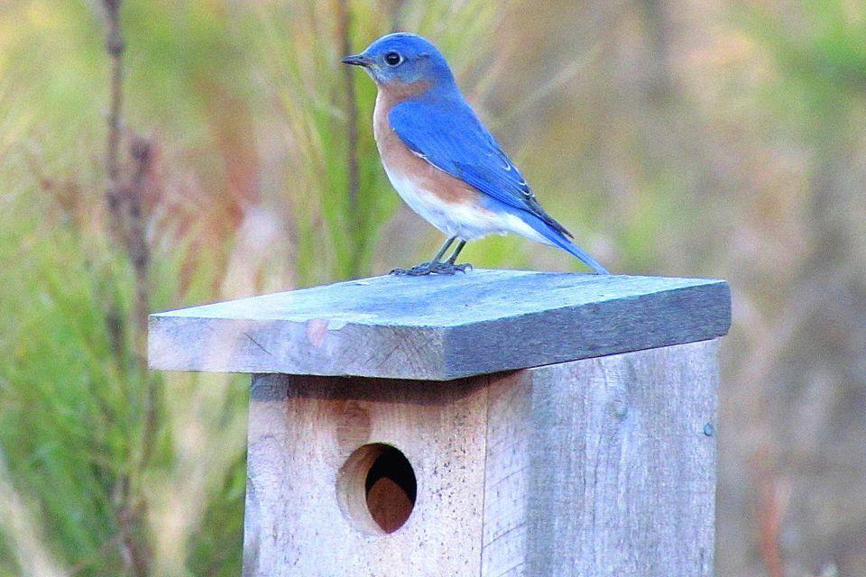 blue bird house with blue bird on top