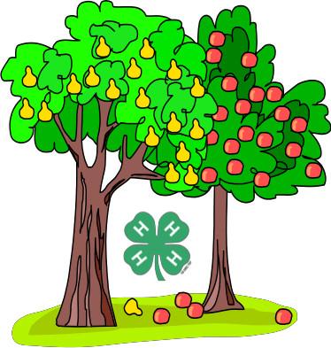 4-H Plant Sale Fruit tree