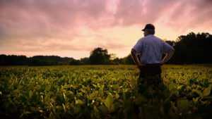 Farmer out standing in his soybean field during sunset
