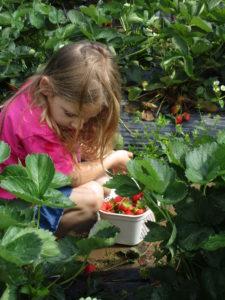 Little Girl in Strawberry Field