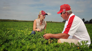 Two farmers kneeling in a peanut field while discussing the crop.