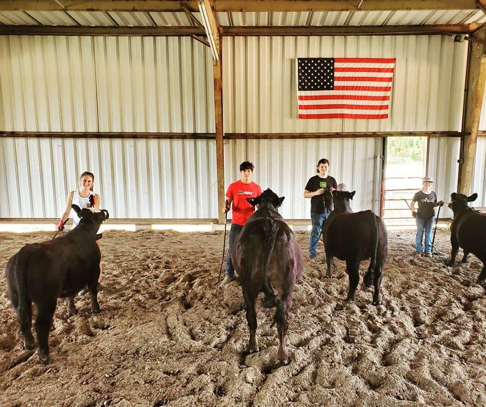 Working Livestock