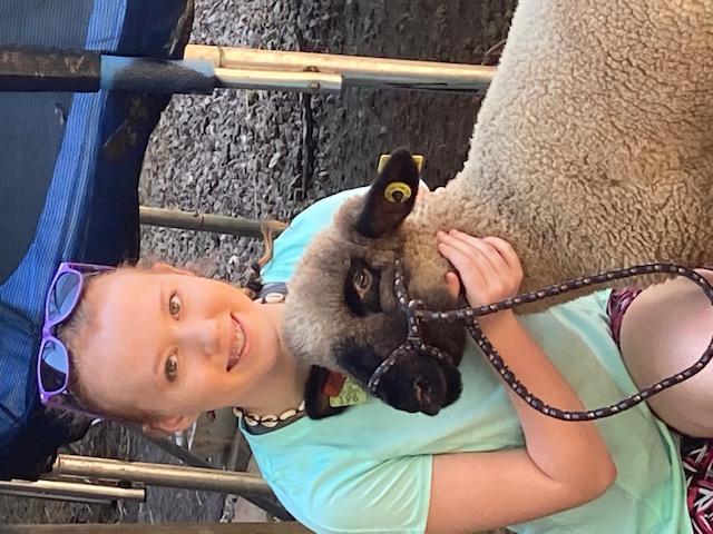 4-H Market Lambs