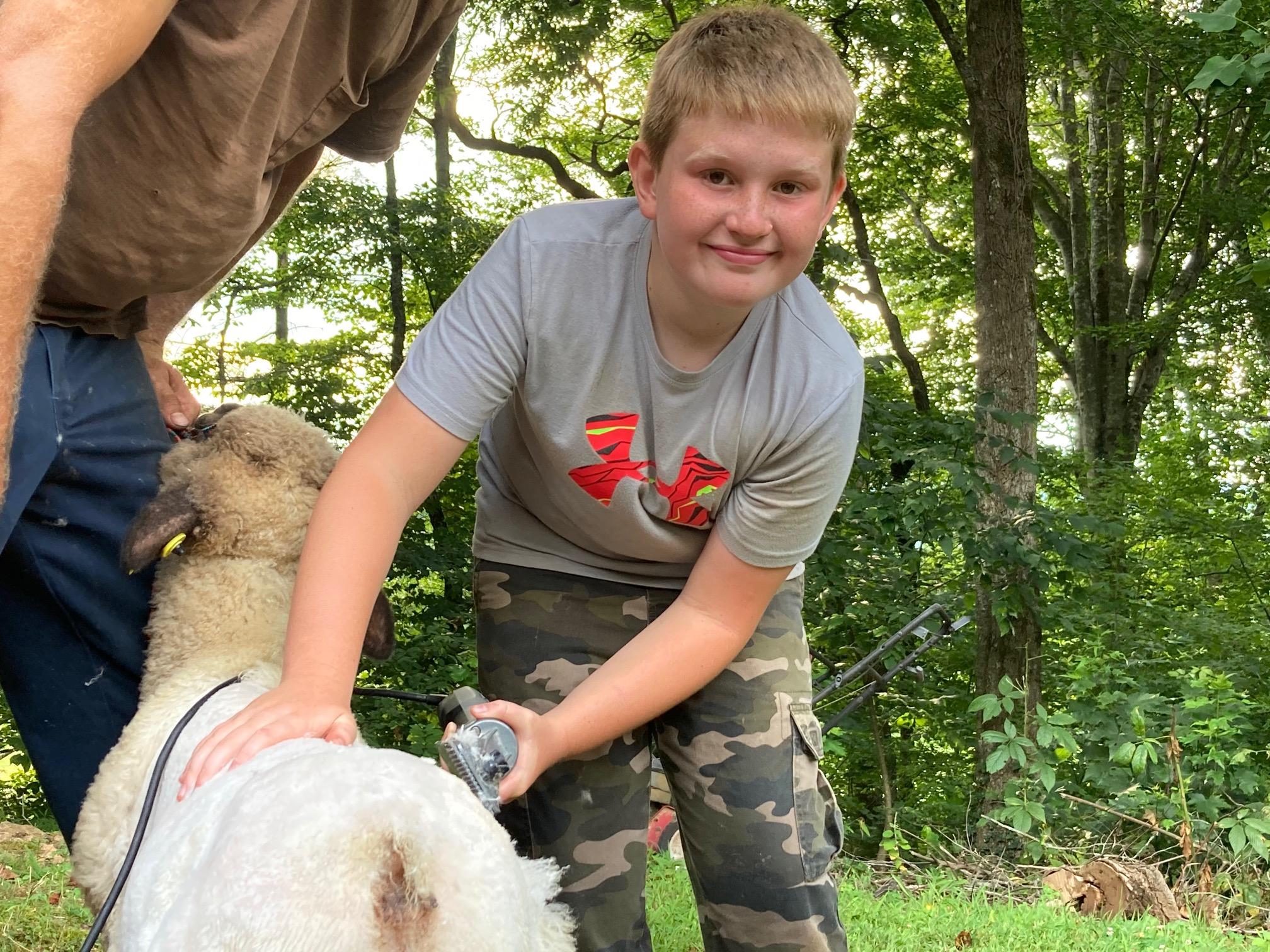 4-H Market Lamb