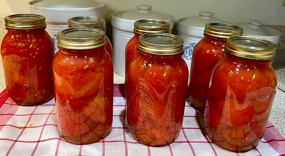tomatoes cooling
