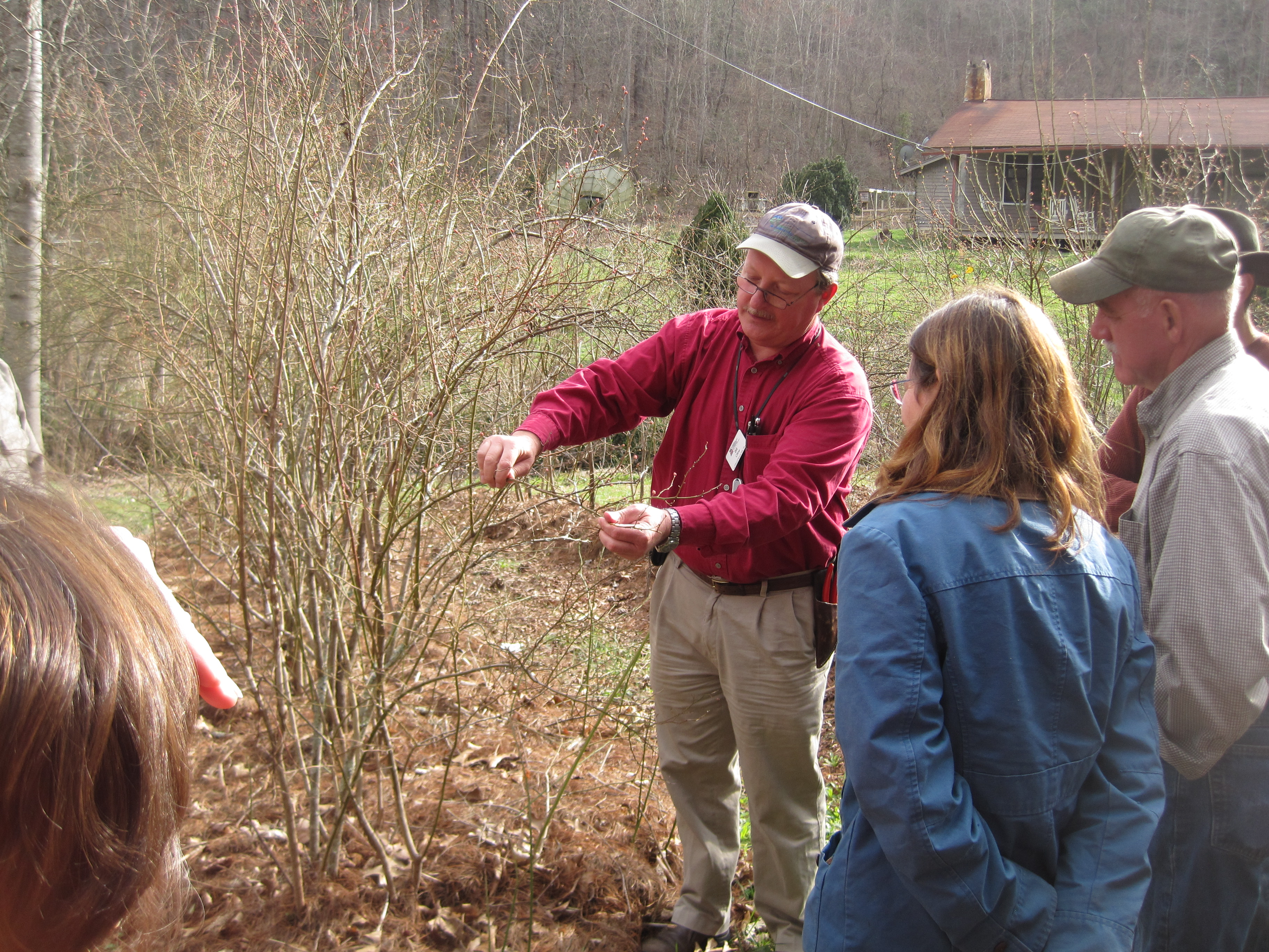 Dr. Bill Cline, NCSU Blueberry Specialist, sharing tips on how to prune blueberries.