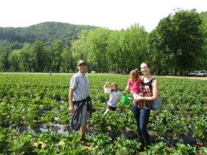 Family Picking Fresh Strawberries
